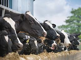 吾玛牛奶-生产环境