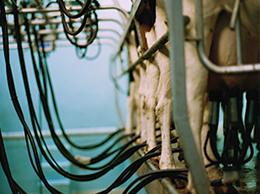吾玛牛奶生产环境